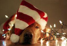 Christmas TTC coping strategy www.yourfertilityjourney.com