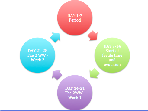 yourfertilityjourney.com The Trying to Conceive Cycle of Hope
