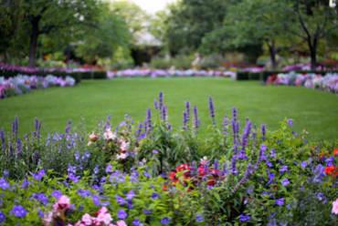The Fertile Garden