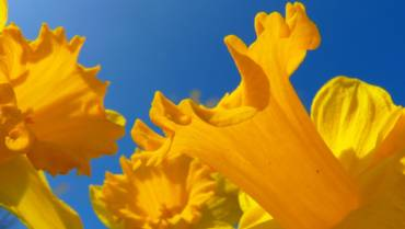 Fertility and Vitamin D – The Facts