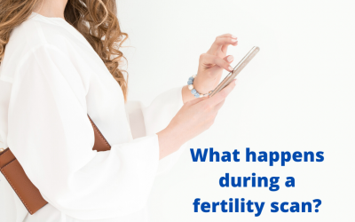 What happens during  fertility scans?